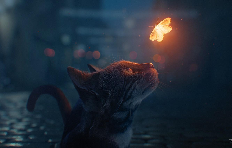 Сьогодні у Європі святкують Міжнародний День кота - тварина, коти, Європа - koshka babochka noch boke by maxasabin