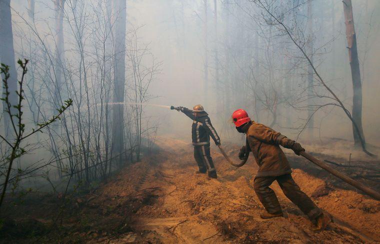 Пожежа в чорнобильських лісах рознесла радіацію на великі відстані - Чорнобильська зона, пожежа, ліси - medium 1