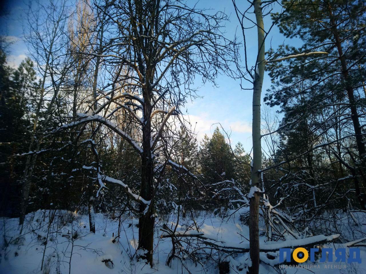 Лише за місяць рослинний світ України зазнав збитків на 14,5 млн грн - стихійні сміттєзвалища, природа, ліси, ліс, вирубка лісу - photo5269702741234659862