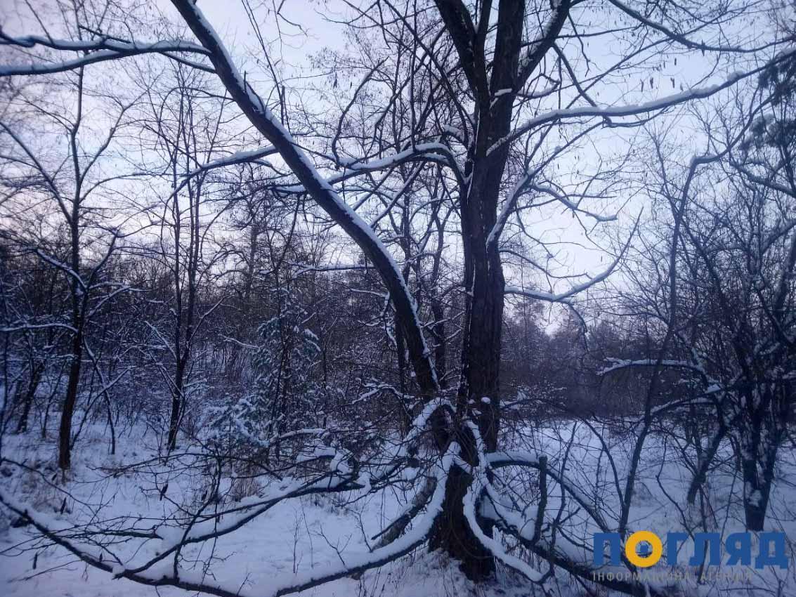 Українські ліси охоронятимуть з космосу - лісовий фонд, ліси, ліс, космос, вирубка лісу - photo5269702741234659866