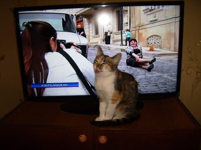 Сьогодні у Європі святкують Міжнародний День кота - тварина, коти, Європа - photo 2021 02 17 14 12 39