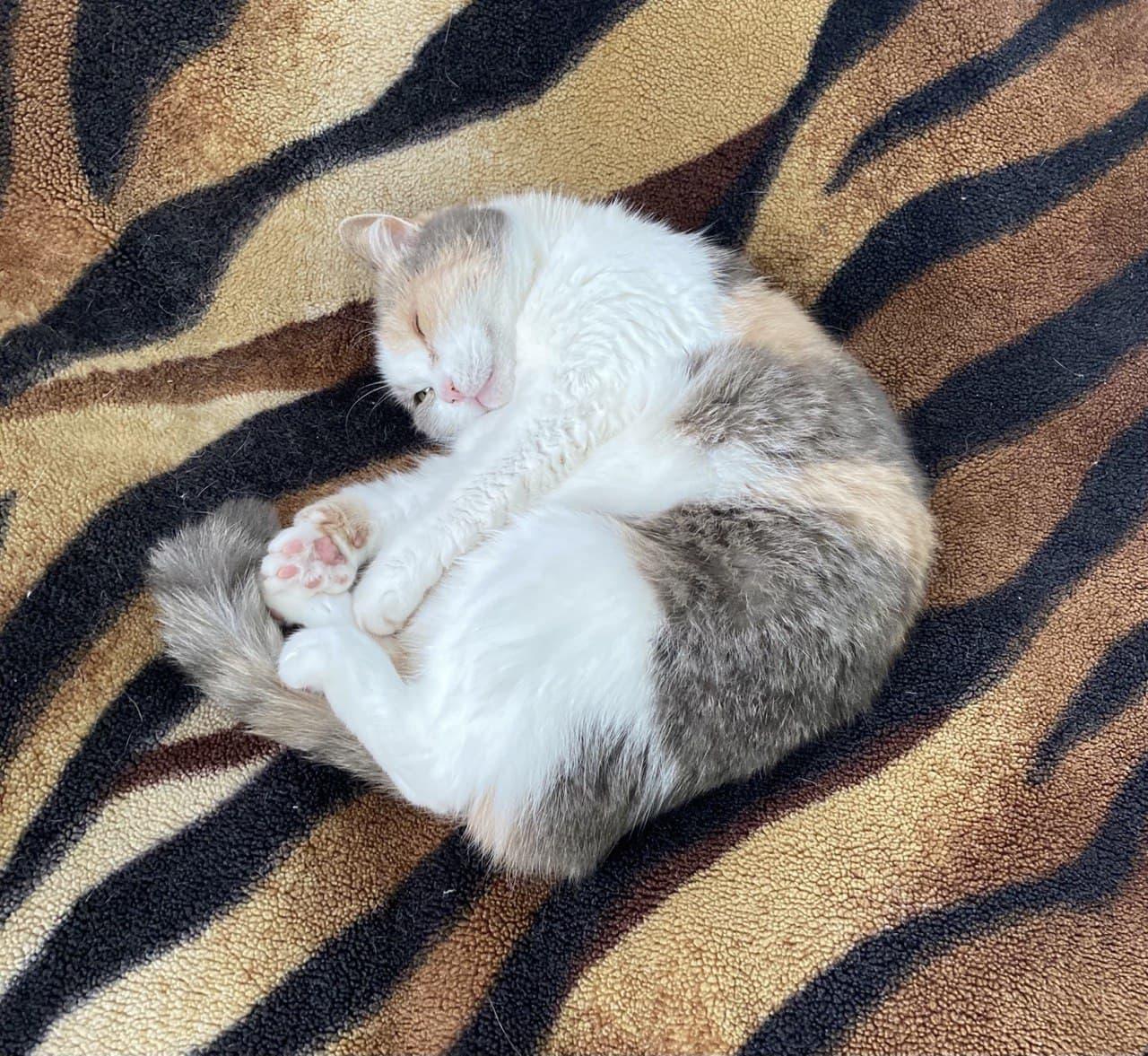 Сьогодні у Європі святкують Міжнародний День кота - тварина, коти, Європа - photo 2021 02 17 15 05 16